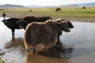 mongolia36