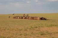 mongolia65